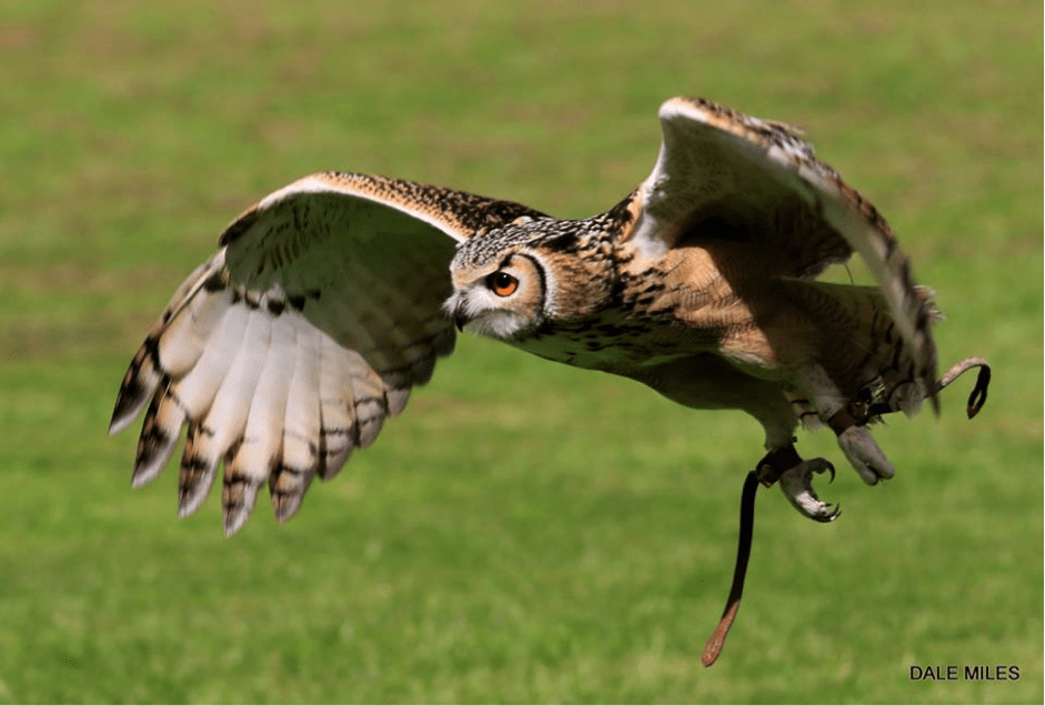 Cathedral Falconry - Chester Cathedral
